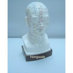 頭部穴位模型